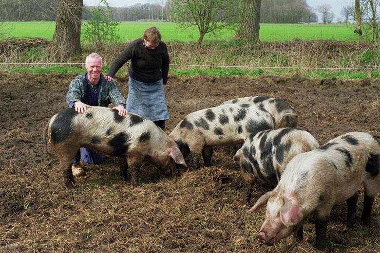 Bonte Bentheimer varkens bij boerin Teresa en boer Peter